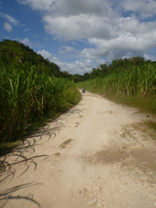 Riding_the_Cane_Fields