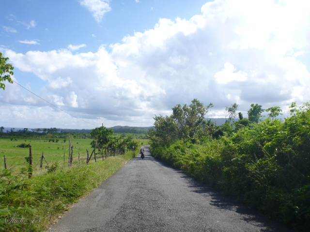 The Road to Long Bay